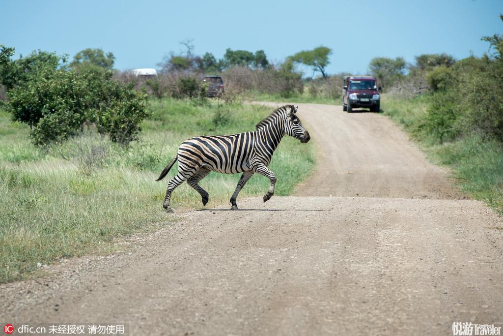 国家公园克鲁格国家公园是南非最大的野生动物园