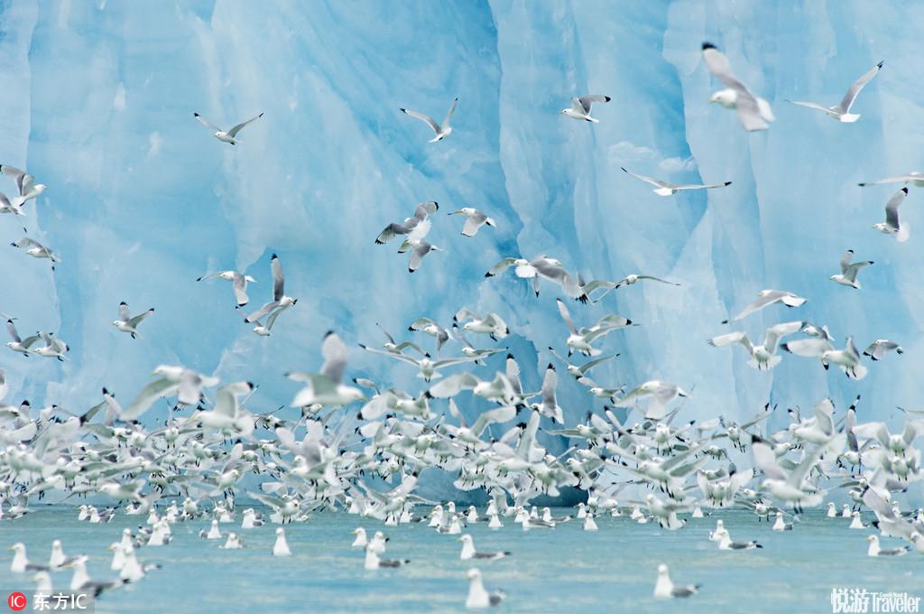 """斯瓦尔巴德(Svalbard),挪威)斯瓦尔巴德在挪威语中是""""寒冷海岸""""意思,群岛位于挪威本土与北极点之间..."""
