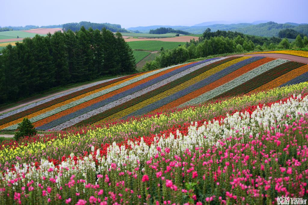 日本北海道美瑛的四季彩之丘