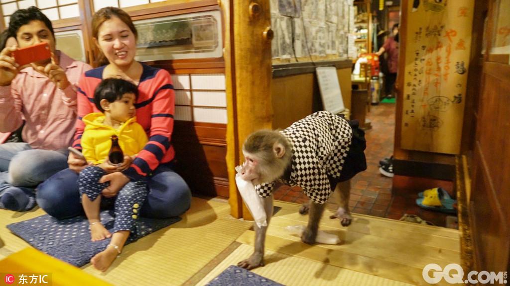"""2017年8月9日报道(具体拍摄时间不详),在日本枥木县宇都宫市有一家名叫""""Kayabukiya""""的居酒屋,这个居酒屋非常的与众不同,居酒屋的老板雇佣了几只猴子来做服务员为客人端菜递酒。"""