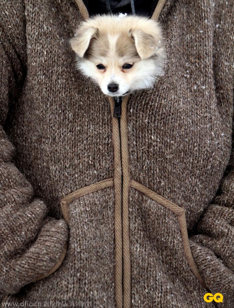 盘点冬季小动物取暖萌态