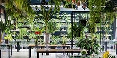 """Botanica植物园"" 绿植环绕"