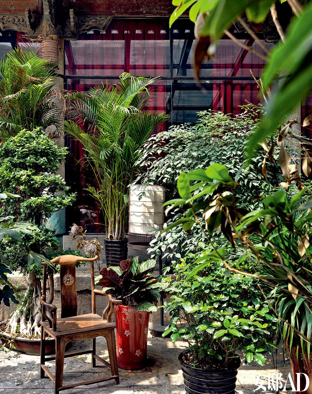 花草、 植物、 光线乃至 万物,皆可入诗入画,冰逸本人就是一首无与伦比的诗,一幅最动人的画。庭院常充盈绿色植物,虽不植于地,也宛若花园,凤尾、桂花、七叶树、兰花等等,时节到时,桂花开香。