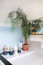 浴室里有一棵每年长势都很好的绿玉树,雕塑来自艺术家杨茂源。
