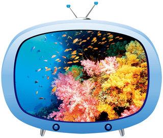 奇幻珊瑚礁 Coral Reefs
