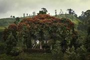 約72公里外,一塊200米高的巨巖上矗立著5世紀時的錫吉里耶(Sigiriya)城堡,它簡直堪稱是亞洲的馬丘比...
