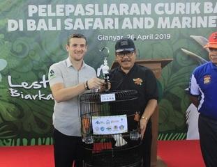 巴厘島野生動物園將長冠八哥放歸野外,拯救這一標志性的自然遺產