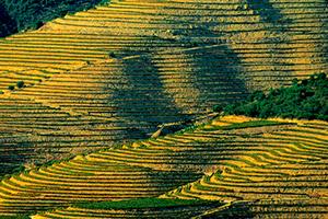 从北向南游遍葡萄牙最著名的十家酒庄(?#24076;? >  </a>  </dt>  <dd class=