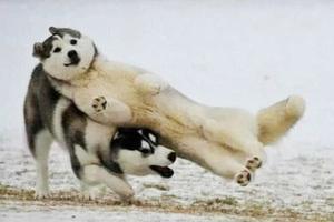 零下20°,你要裹成熊还是冻成狗?