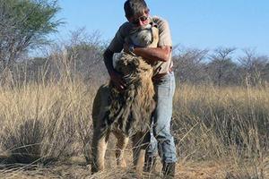 老人与狮子的十载情
