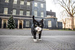 猫奴跪安!英国外交部首席灭鼠官霸道登场