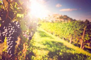 拒绝浪费,喝剩的红酒也能发光发热