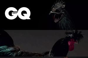 GQ是《绅士季刊》,那这本CQ是《绅士鸡刊》吗? | GQ Daily