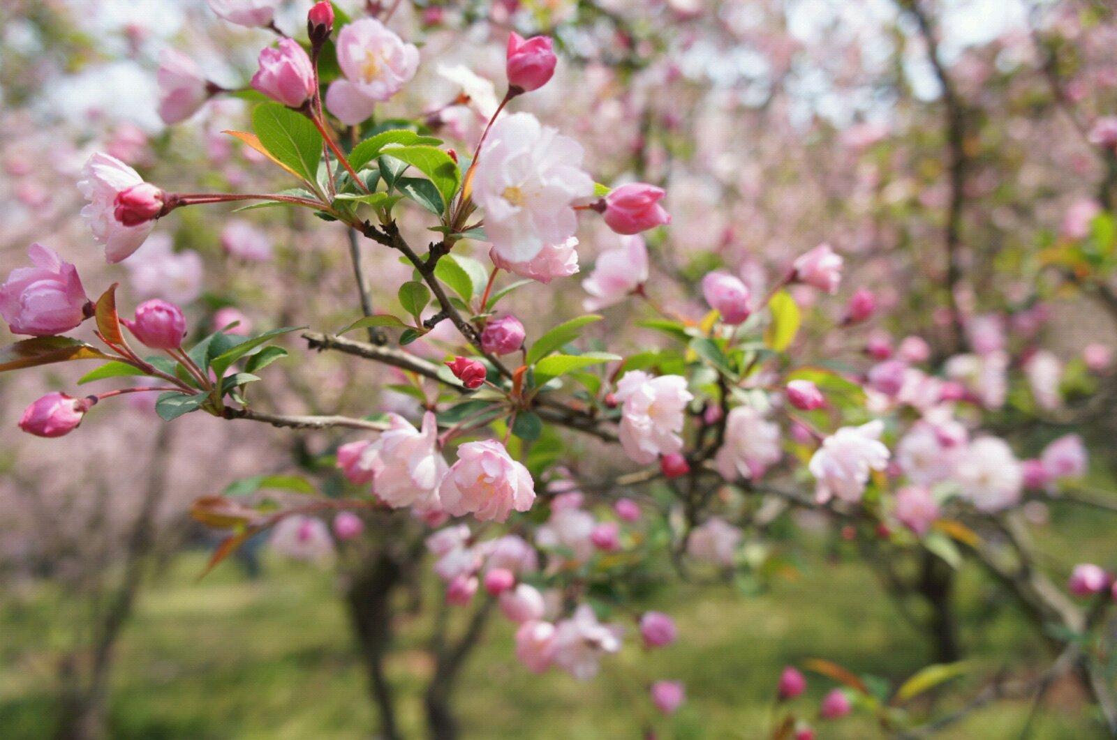 【春装搭配】春天来了人要比花美哦~