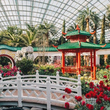 新年赏花好去处,新加坡滨海湾花园邀你共赴新春花卉展