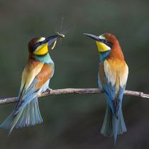 2015年伦敦野生动物协会摄影获奖作品新鲜出炉