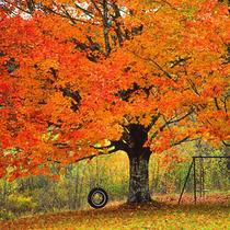 金秋十月层林尽染 寻找国外最美旅行地