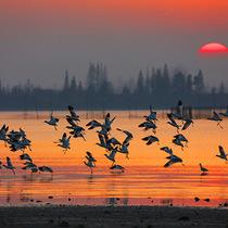 离离暑云散袅袅凉风起 古诗词中寻觅处暑早秋美景-旅行度假