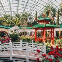 新年赏花好去处,新加坡滨海湾花园邀你共赴新春花卉展     -旅行度假