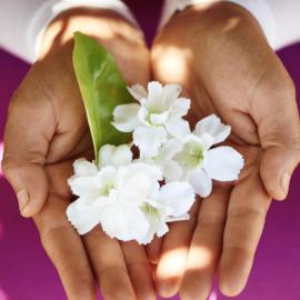 可持续发展香水之路——内外皆美的奢华香氛 Sana Jardin